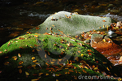 Rocks in autumn river