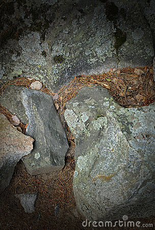 Rocks and dead vegetation