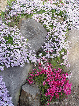 Rocks and Flowers
