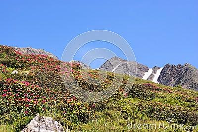 Rocks, flowers and blue sky