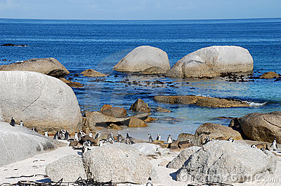 Rocks, ocean and penguins