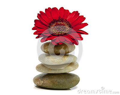 Rocks with red flower