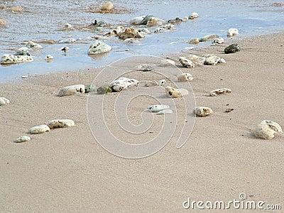 Rocks and shells on beach
