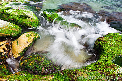 Rocky beach landscape with green seaweed