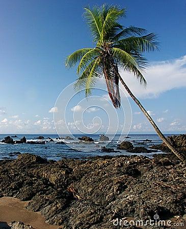 Rocky beach with palm tree