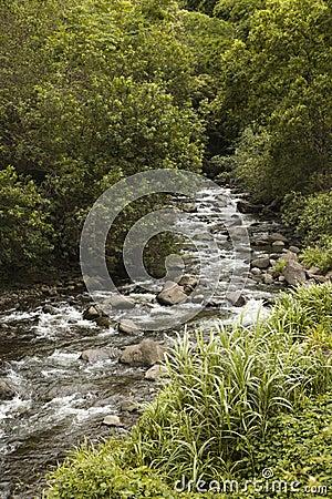 Rocky flowing creek
