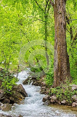 Free Rocky Mountain Stream Stock Photos - 42348783