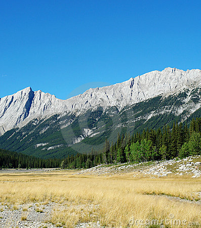 Rocky mountains and meadow