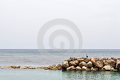 Rocky reef and bird