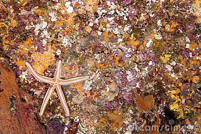 Rocky Reef with Starfish