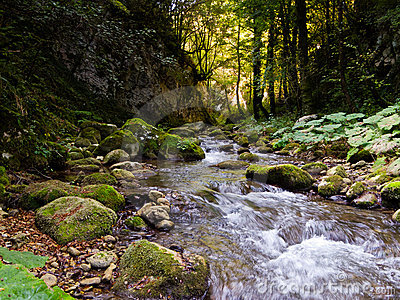 rocky river in forest royalty free stock images image