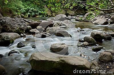 Rocky river in jungle
