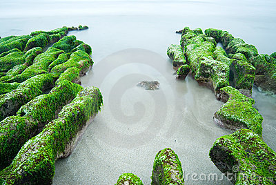 Rocky Seacoast full of green seaweed