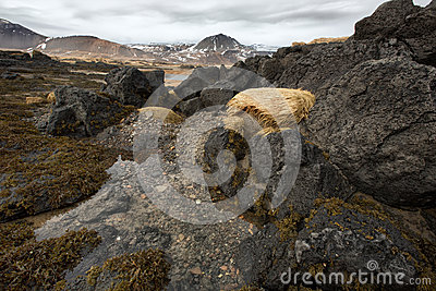 Rocky shoreline with seaweeds