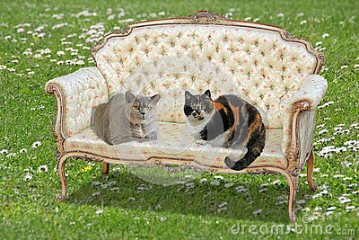Rococo regency chaise stock photo image 80569018 for Cat chaise longue