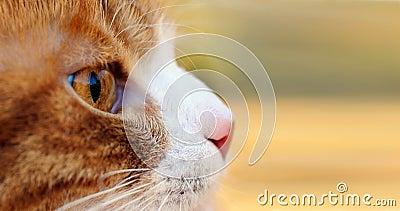 Rode kat die in openlucht jaagt