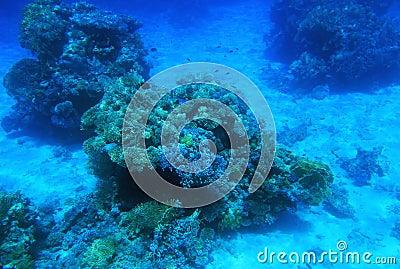 Rode Overzees onderwater