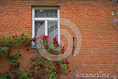Rode rozen en muur royalty vrije stock foto afbeelding 242985 - Grijze en rode muur ...