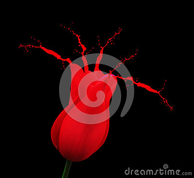 Rode tulp met verfplonsen