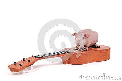 Rodent Musician