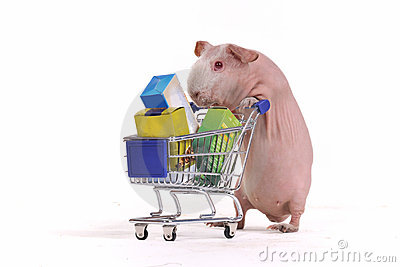 Rodent in a Shop