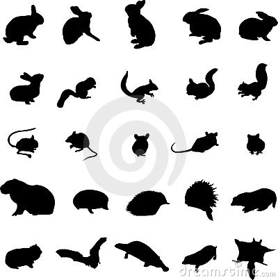 Rodents and small mammals