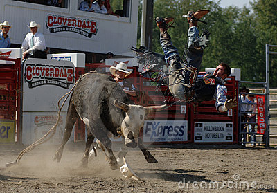 Rodeo: Bull Fighting Editorial Stock Photo