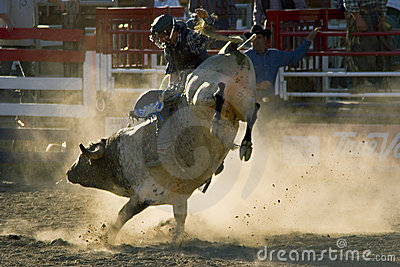 Rodeo Bull and Rider