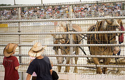 Rodeo Cowtown Editorial Stock Photo