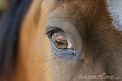 Rodeo horse with reflection in eye