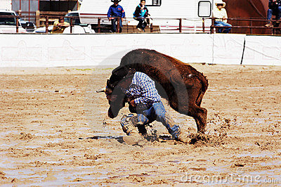 Rodeo in the mud.