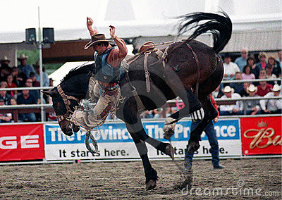 Rodeo: Saddle Bronc Editorial Stock Photo