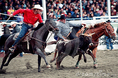 Rodeo: Team Roping Editorial Stock Image