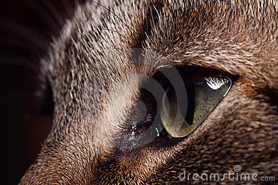 Rodnaden eyes s