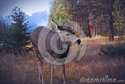 Roe Deer In Forest Free Public Domain Cc0 Image