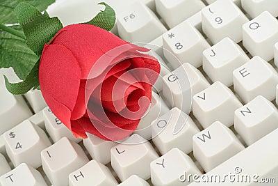 Rojo color de rosa y teclado