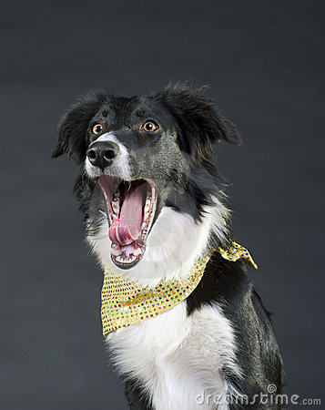 Roligt skrika för hund