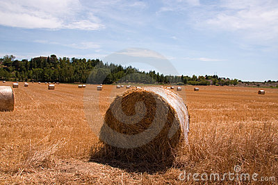 Roll of hay bales in field