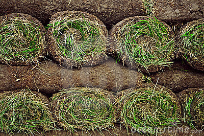 Rolled sod