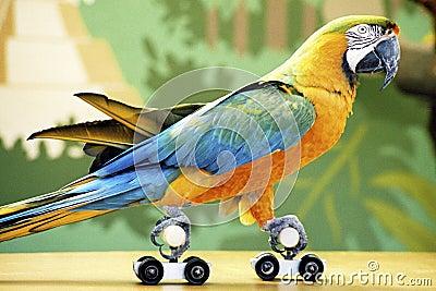 Rollerskating Parrot