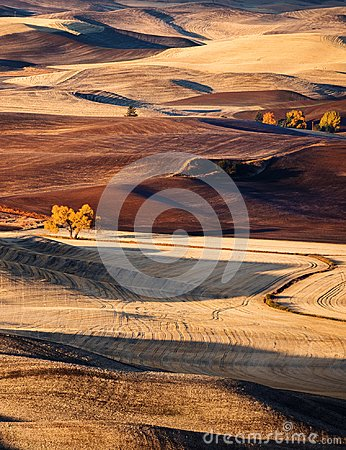 Free Rolling Hills Stock Photography - 103283002