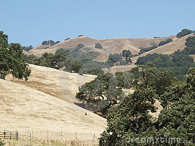 Rolling hills and grassland