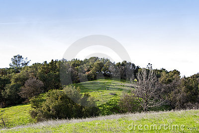 Rolling Hills with Oaks and Spring Grasses