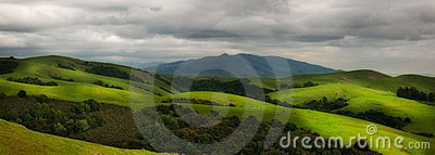 Rolling hillside pasture