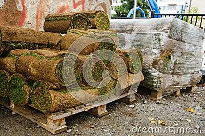 Rolls of lawn turf