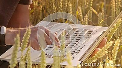 Rolnik pisać na maszynie na komputerowej klawiaturze w pszenicznym polu zbiory