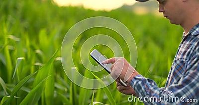 Rolnik używa cyfrowego pastylka komputer, kultywująca kukurydzana plantacja w tle Nowożytny technologii zastosowanie wewnątrz zbiory wideo