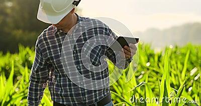 Rolnik używa cyfrowego pastylka komputer, kultywująca kukurydzana plantacja w tle Nowożytny technologii zastosowanie wewnątrz zdjęcie wideo