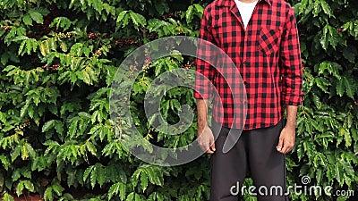 Rolnik z kapeluszowy ono uśmiecha się w kawowej plantacji pola krajobrazie zdjęcie wideo