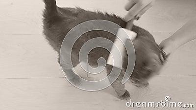 Rolo e gato do fiapo filme